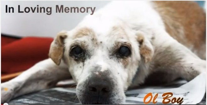 sad story of a dog-Ol-Boy-Netmarkers