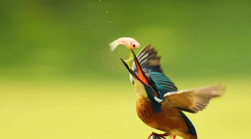 Trending, viral video of the most intelligent bird hunting fish-Netmarkers