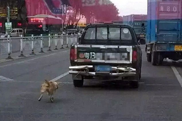 viral news of a dog being chained and dragged by truck- Netmarkers