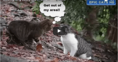 Cats fighting cutely and in style- Netmarkers