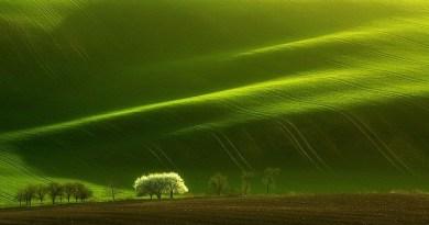 hynotic fields-Netmarkers