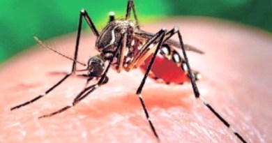 zika virus-Netmarkers