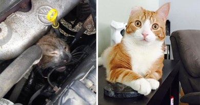 10 touching stories of rescued cat who are now well- Netmarkers