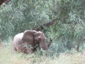Elephant shot on his head- Netmarkers