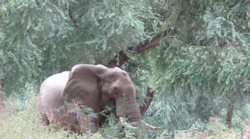 Elephant shot on his head- Netmarkers