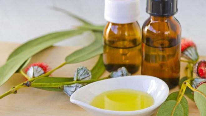 Eucalyptus-oil-for beards- Netmarkers