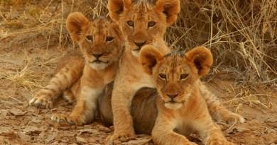 Kruger national park-netmarkers