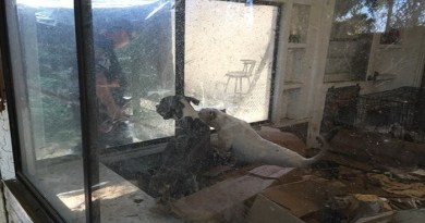 Starving Pit Bulls Rescued-Netmarkers