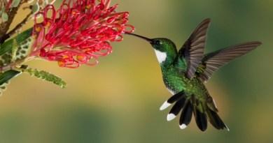 humming-birds-weight-less-than-a-nickel-netmarkers
