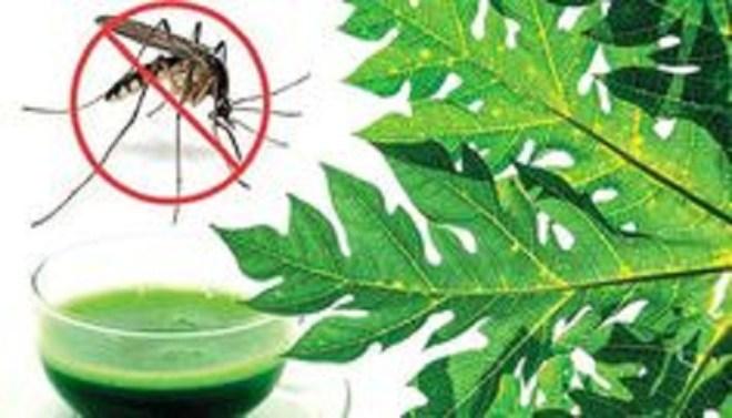 methods-to-treat-chikunguniya-at-home-netmarkers