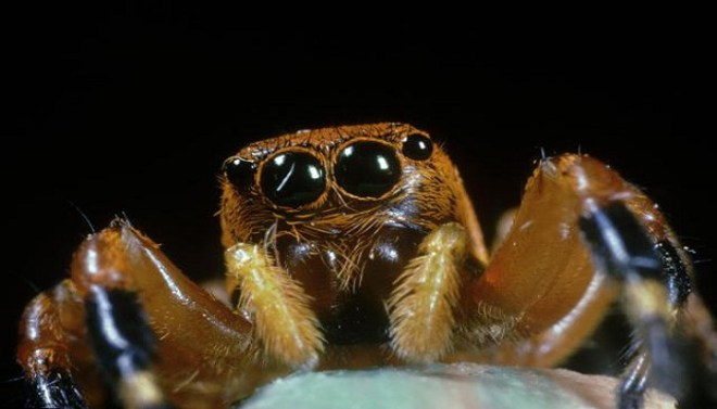 spider-venom-netmarkers