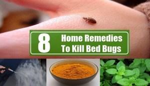 bugs-free-home-netmarkers