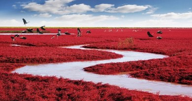 red-beach-china-netmarkers