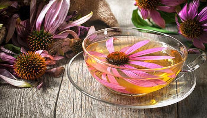 echinacea-netmarkers