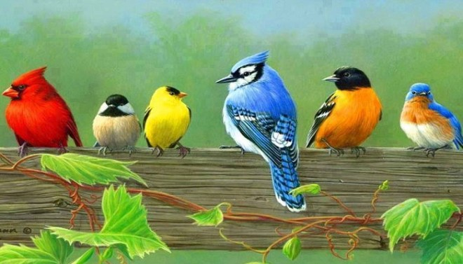 Beautiful-Birds-Netmarkers