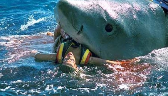 Shark netmarkers