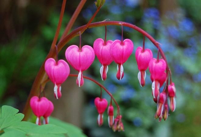 bleedingheart-netmarkers