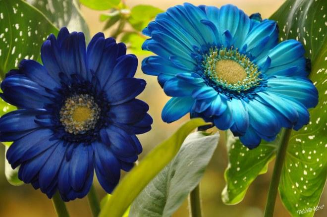 flower1-netmarkers