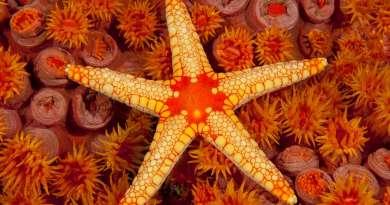 starfish-netmarkers