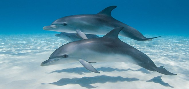 Dolphins-netmarkers