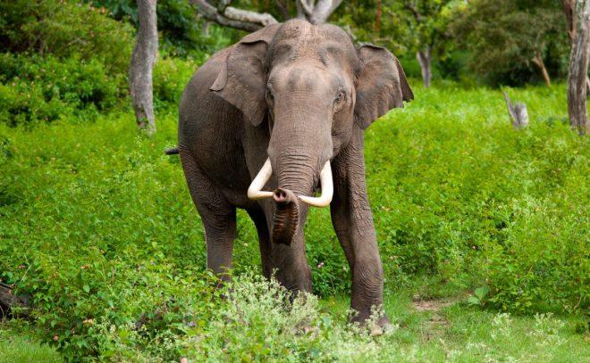 Elephants-netmarkers