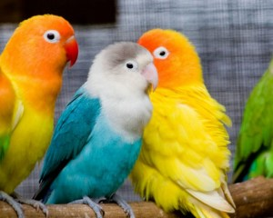 birds-netmarkers