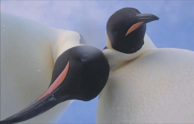 penguin4-netmarkers