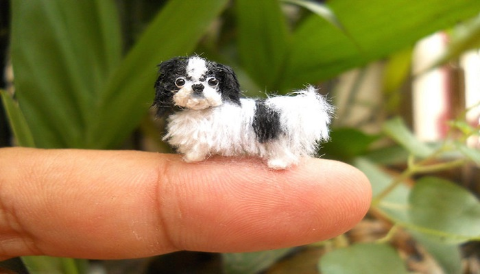 Top 10 Smallest and Cute Looking Animals!