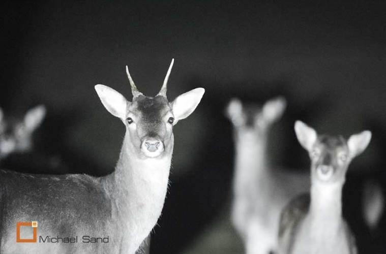 På (foto)jagt med verdens nok kraftigste lommelygte