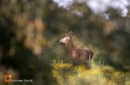Tre hjorte nedlagt i Jyske ås