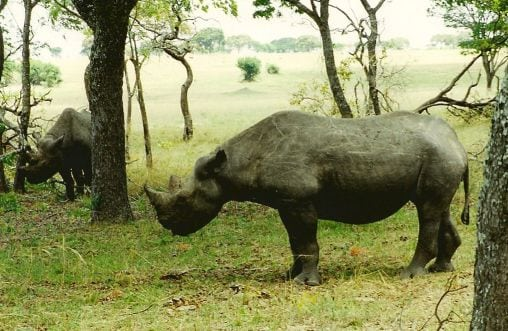 Næsehorn og finanskrise