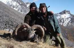 Nepal ventes at genåbne jagt på blue sheep i 2012