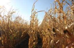 Landbruget bruger for mange sprøjtemidler