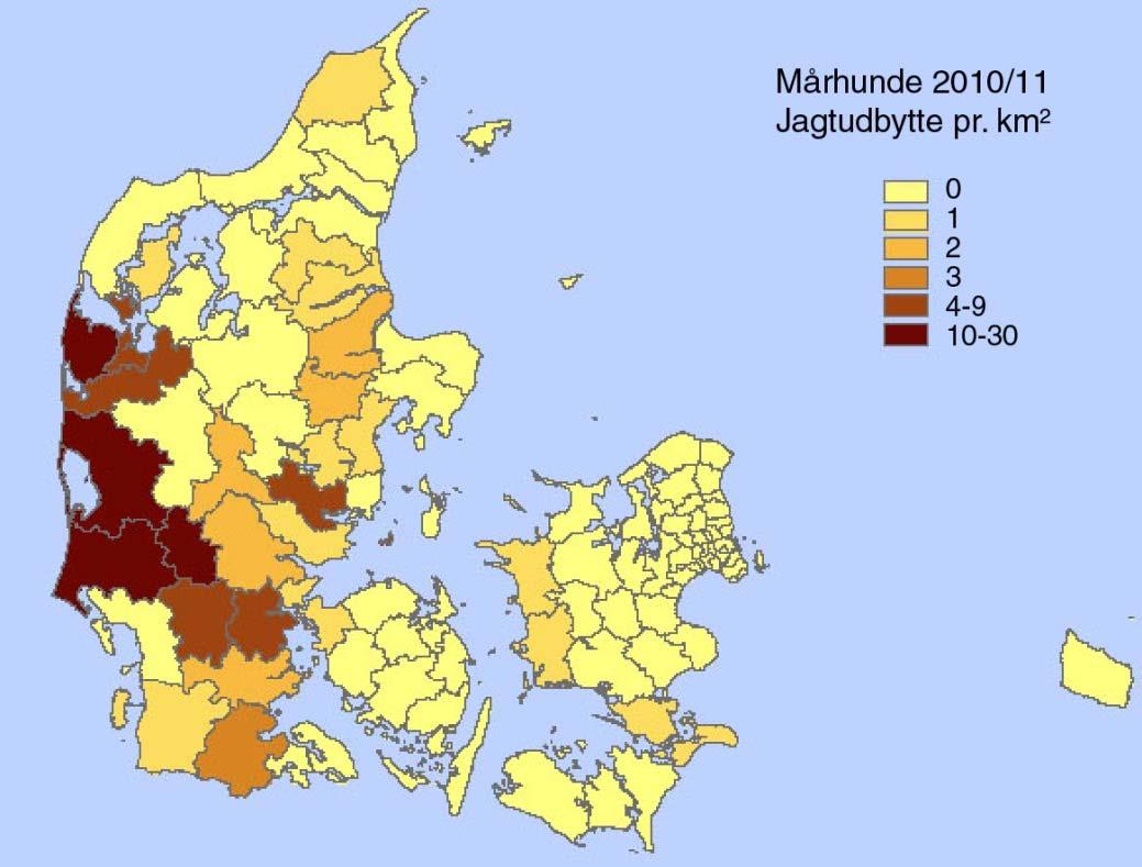 Figur2 - Fordeling på kommuner af mårhunde indberettet til vildtudbyttestatistikken for jagtsæsonen 2010/11.