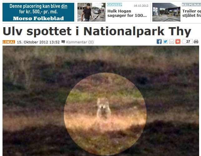 Ulv fotograferet Nationalpark Thy