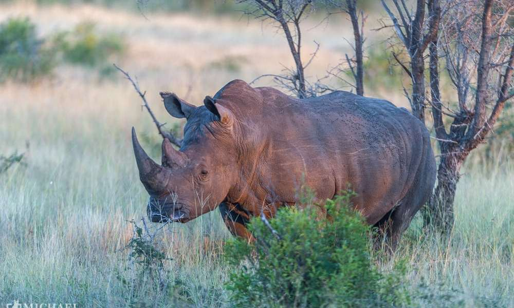500 krybskytter menes dræbt i Krüger National Park