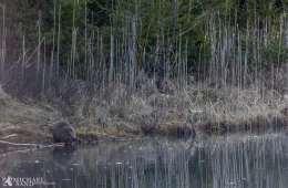 Hvordan reagerer en riffelkugle mod vand?