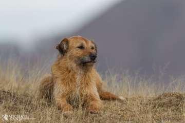 Viden om: Hvad siger loven om løsgående hunde