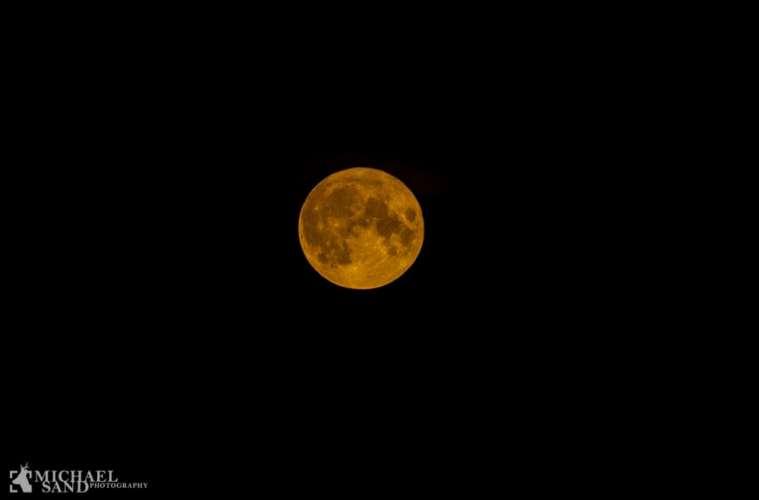 Pas på vildtet ved fuldmåne