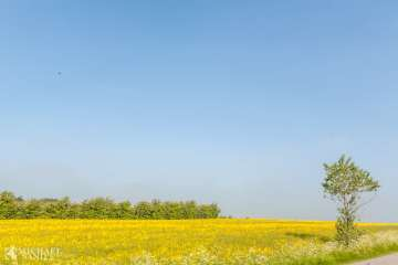 Uenighed i EU om forlængelse af glyphosat anvendelse