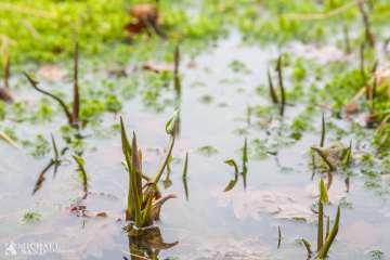 Pleje af småsøer og vandhuller 1