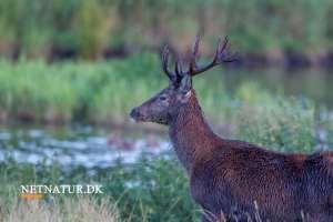 Indstilling angriber lovligheden i lokal styring af jagttider