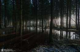 Private skovejere skal sikre mere vild og urørt natur