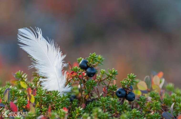NORGE: Jæger fundet omkommet