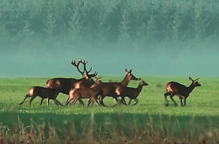Jagttider og sprossefredninger: Status og konsekvens
