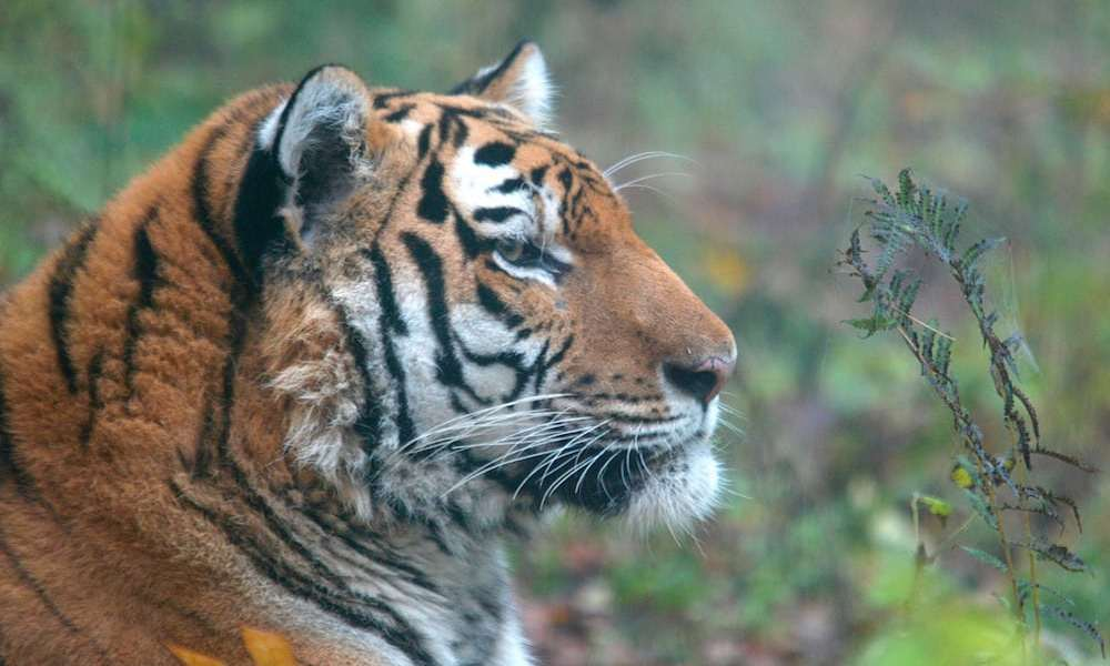 Flere vilde dyr i fremgang