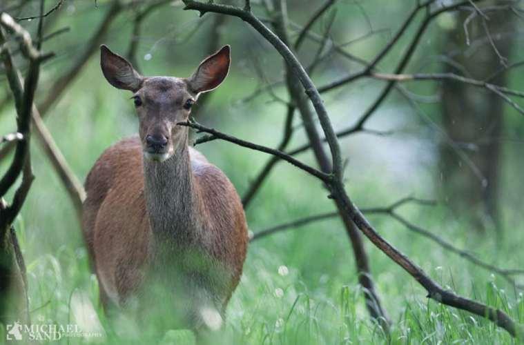 Naturnær skovdrift - når naturen klarer det selv