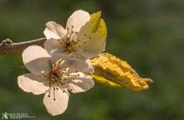 Pas godt på bierne
