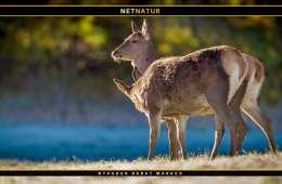 Naturstyrelsen: Her er den ny jagtpolitik
