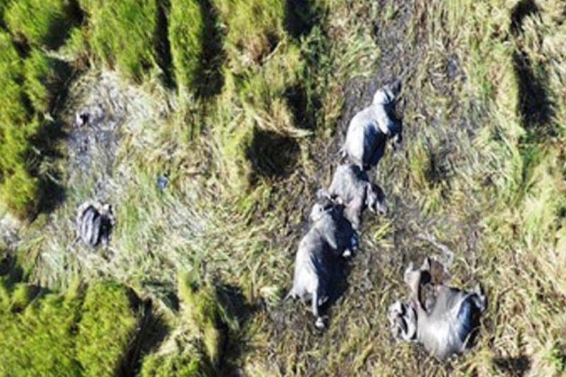 Tanzania: To tredjedele af elefanterne forsvundet på fire år